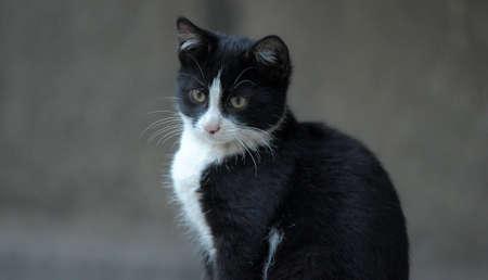 black and white cat Stock Photo - 10079657