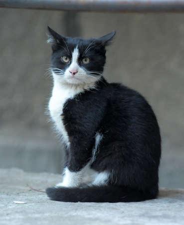 black and white cat Stock Photo - 10079653