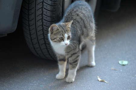 street cat Stock Photo - 10079676