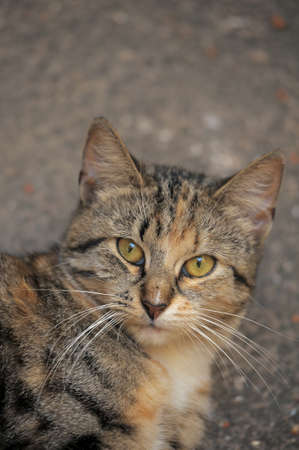 rueful: homeless  cat