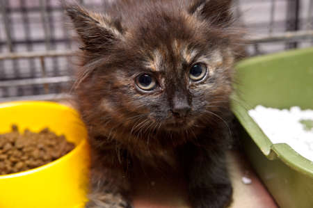 little sick kitten in a cage isolated from other animals photo