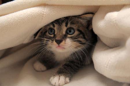 kitten hiding photo