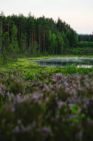 forest lake in the evening Stock Photo - 10079240