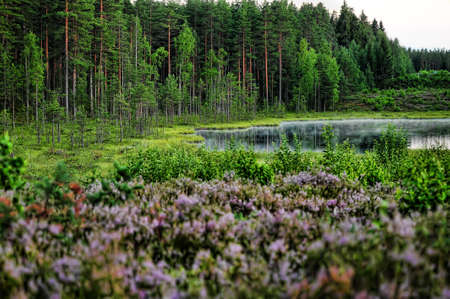 forest lake in the evening Stock Photo - 10079250