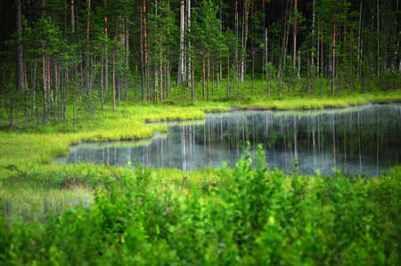 forest lake in the evening Stock Photo - 10079248