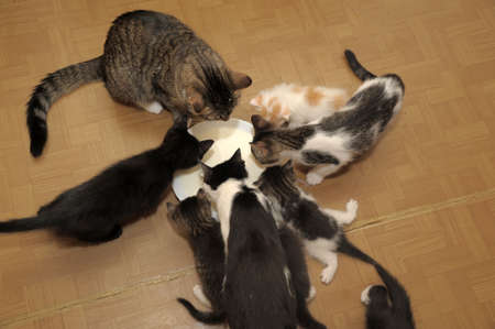 a lot of cats eat from the same bowl photo