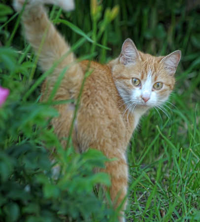 ginger cat with a garden