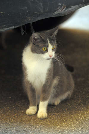 homeless  cat Stock Photo - 10221492