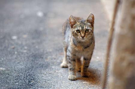 homeless  cat Stock Photo - 10221485