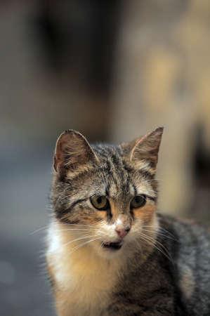 plainness: homeless  cat