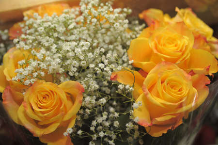 bouquet of yellow roses Stock Photo - 10221471