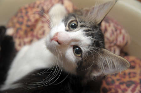 gray and white kitten photo