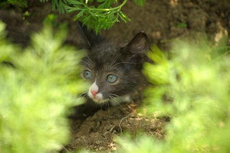 green-eyed black kitten playing Stock Photo - 10326675