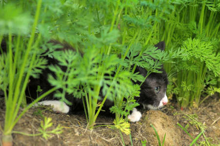 Outdoor kitten Stock Photo - 10326682