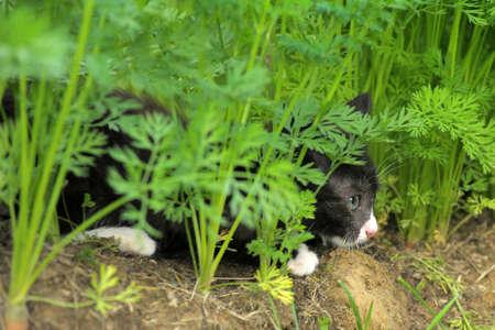 Outdoor kitten Stock Photo - 10326682