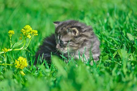 gray kitten in the grass photo