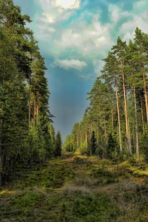 coniferous tree: clearing in the woods Stock Photo