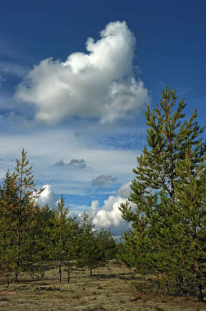 clouds over the forest Stock Photo - 10447963