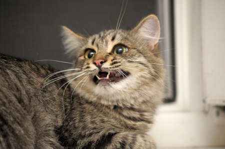 catfight: Cat