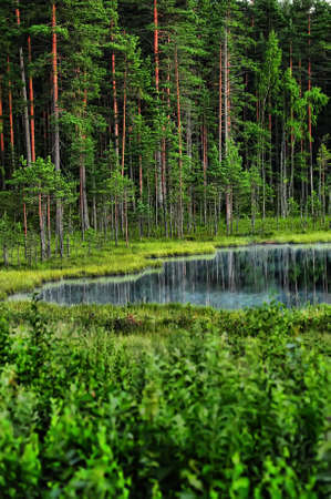 Forest lake in the evening Stock Photo - 10482503