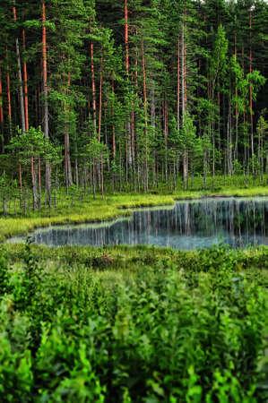 pantanos: Lago de bosque en la noche