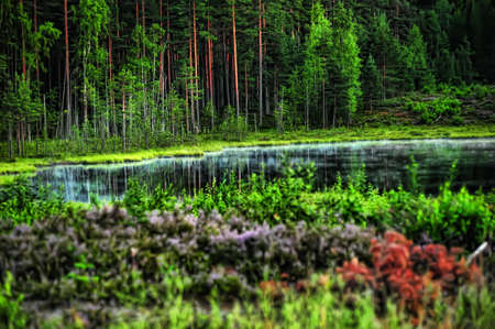 Forest lake in the evening Stock Photo - 10495017