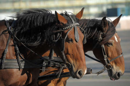 Horse drawn carriage photo