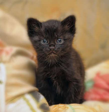 little black kitty photo