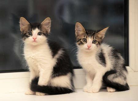 two kittens on the windowsill photo