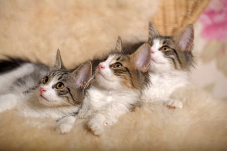 beside: three kittens lying beside