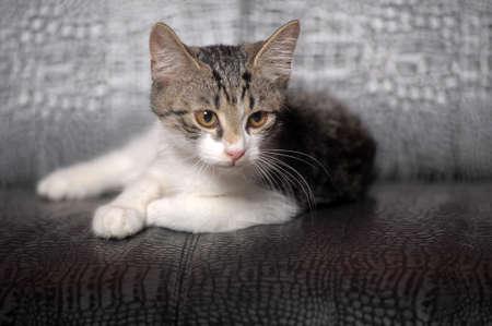 whiskar: Kitten