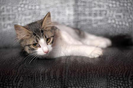whiskar: kitten Stock Photo