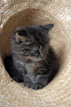 lovely fluffy kitten Stock Photo - 10700949