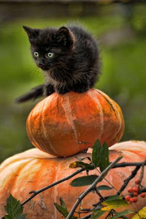 season specific: black cat sitting on pumpkin