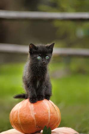 Schwarze Katze sitzt auf Kürbis Standard-Bild - 10746320