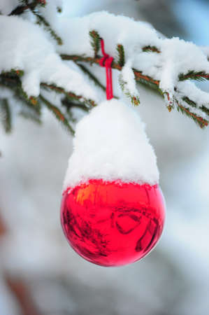 ball on the Christmas tree in snow photo
