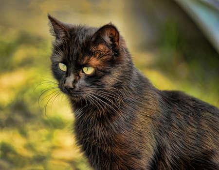 sleek: sleek black cat