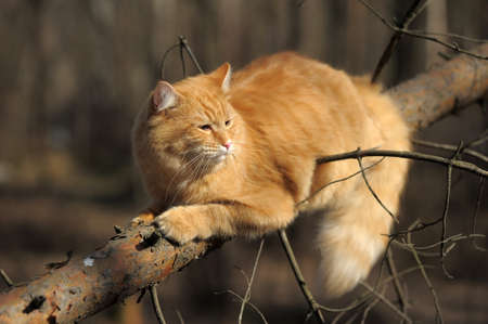 beautiful fluffy ginger cat in the park Stock Photo - 10845045