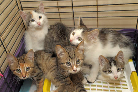calico whiskers: five kittens Stock Photo