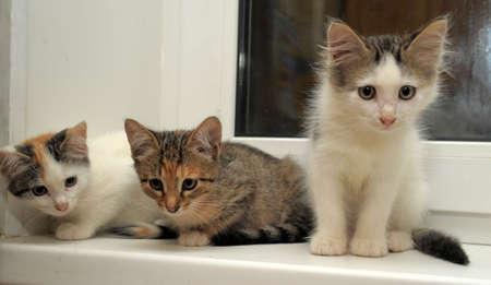 Three kittens sitting next on a window sill