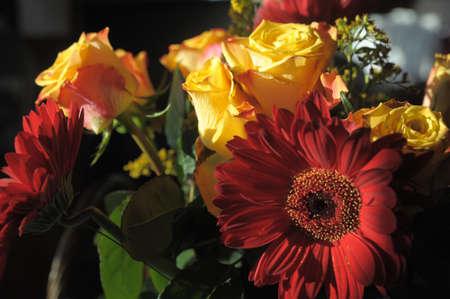 Florets a bouquet Stock Photo - 11039889