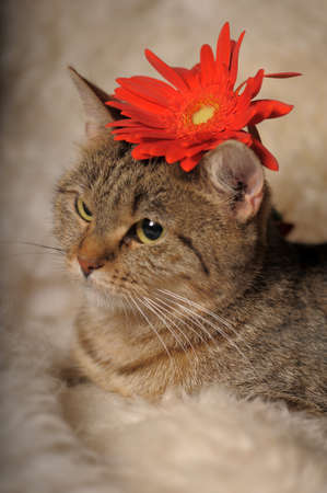 gray tabby cat with flowers Stock Photo - 11038192