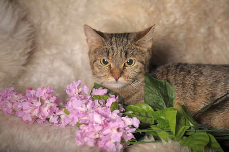 gato atigrado gris con flores photo