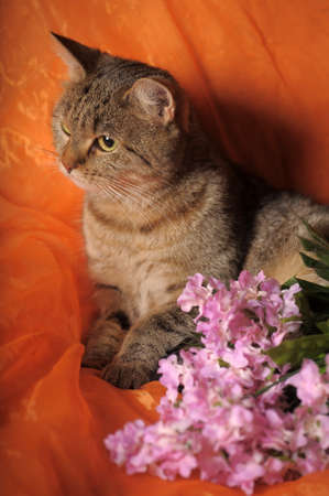 small purple flower: gray tabby cat with flowers