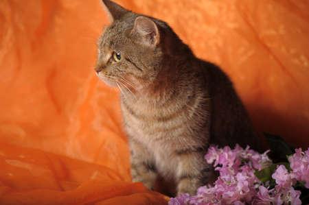 gray tabby: gray tabby cat with flowers