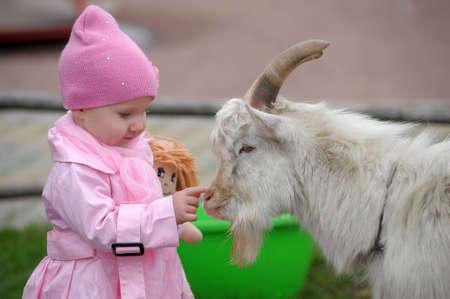 Маленькая девочка с козой Фото со стока
