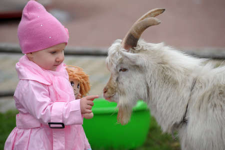 The little girl with a goat Stock Photo - 11038135