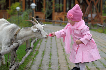The little girl with a goat photo