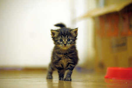 little kitten walking photo