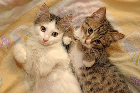 two funny kitten lying near Stock Photo - 11498580